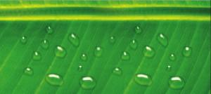 Creare gocce d'acqua